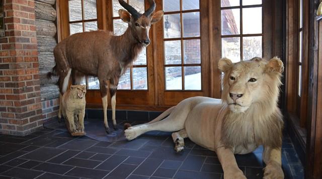 Entrance-lion